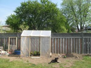 Milo relaxing in front of my uncle's greenhouse. He put his lettuces, peppers, and eggplants in here.
