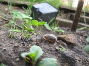 Snail on the prowl