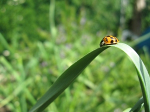 Ladybugs make me happy!