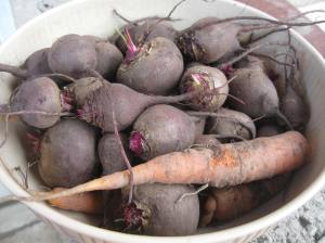 Goodness from the roots: beets and carrots