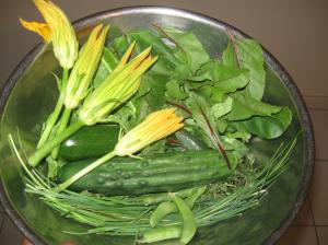 Zucchini blossoms bring some brightness to the green of the cucumbers, dandelion, beans, sage and chives.