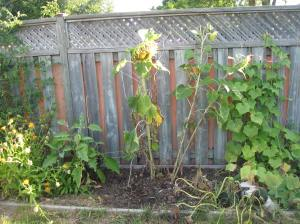 garden aug 24
