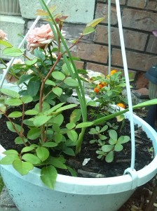 And the hanging basket!