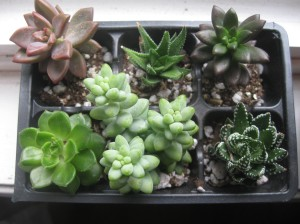 Only the middle plants at the top and bottom and the plant to the bottom right are still alive